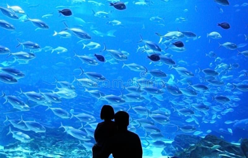 水下的水族馆 免版税库存图片