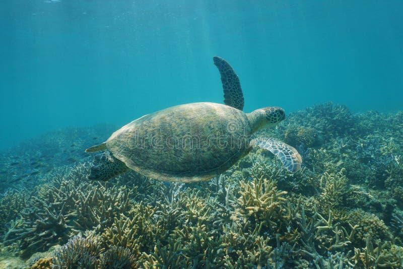 水下的绿浪乌龟海龟属mydas 免版税库存照片
