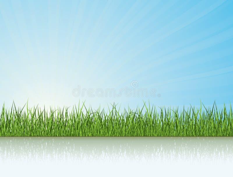 下草阳光 向量例证