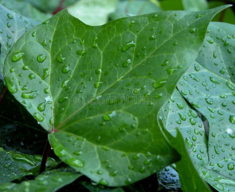 下落叶子水 图库摄影