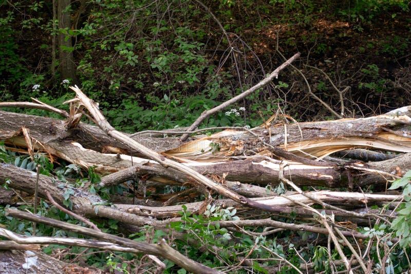 下落的分裂的树 库存图片