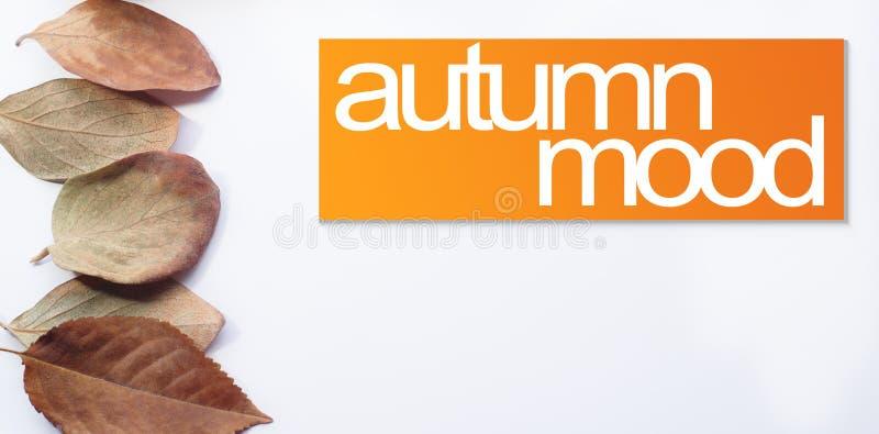 下落的叶子在与文本的一条线安排了:秋天心情 免版税库存图片