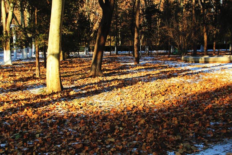 下落的叶子 库存图片