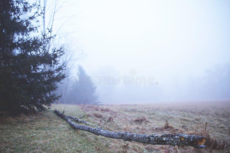 下落的树在一个冷淡的有雾的早晨 库存照片