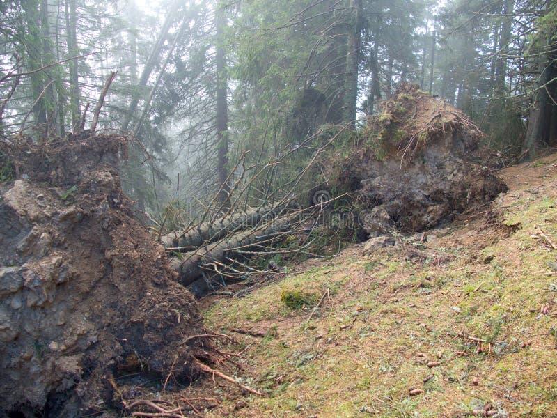 下落的树干在森林里 免版税图库摄影
