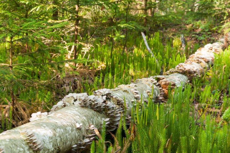 下落的树干用蘑菇 免版税库存图片