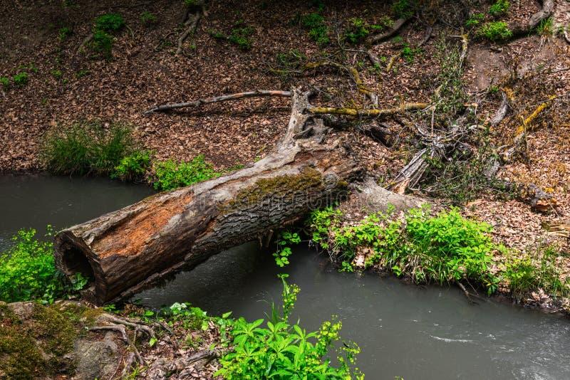 下落的树,桥梁 图库摄影