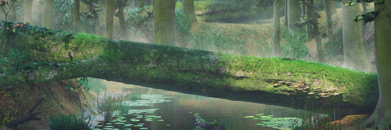 下落的树,自然桥梁在不可思议的森林,美好的幻想森林风景里 免版税库存图片