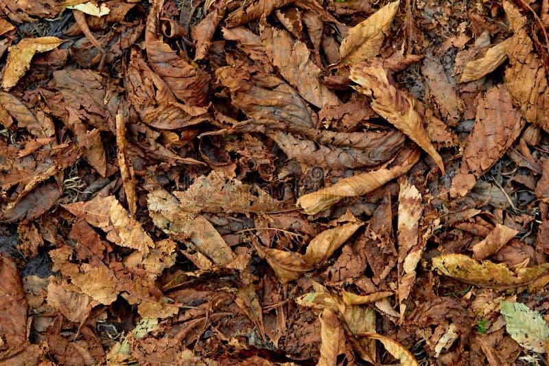 下落的秋叶的背景 库存照片