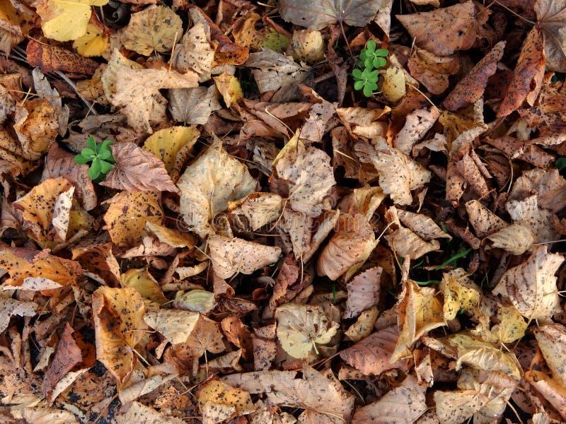 下落的秋天叶子背景  免版税库存图片