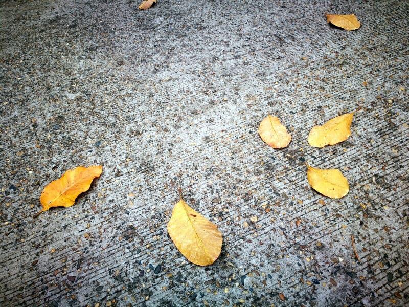 下落的黄色叶子在秋天在混凝土说谎 免版税库存照片