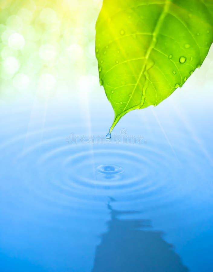 下落秋天绿色叶子波纹水 免版税库存照片