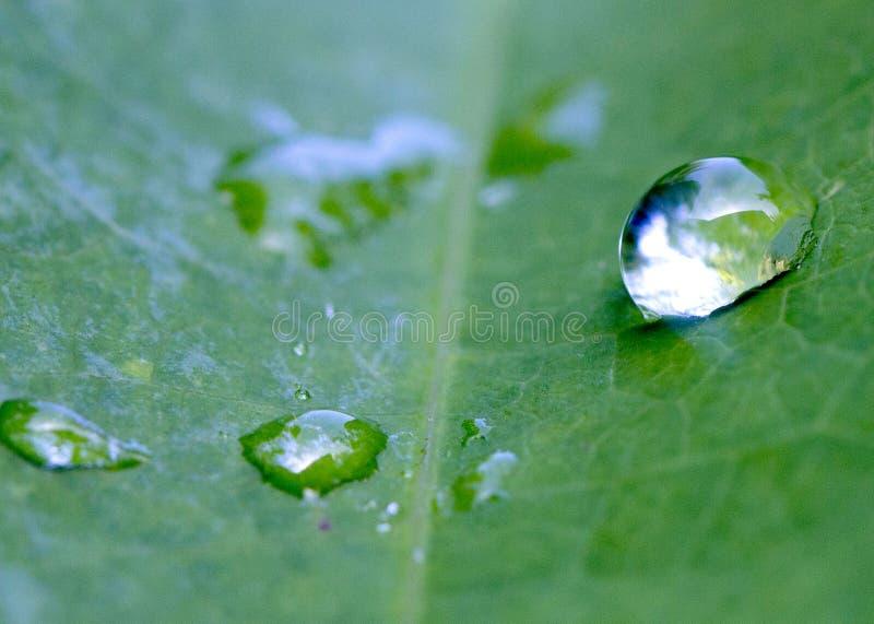 Download 下落冻结的水 库存图片. 图片 包括有 有机, 早晨, 新鲜, 宏指令, 绿色, 庭院, 雨珠, 健康, 草坪 - 59103459