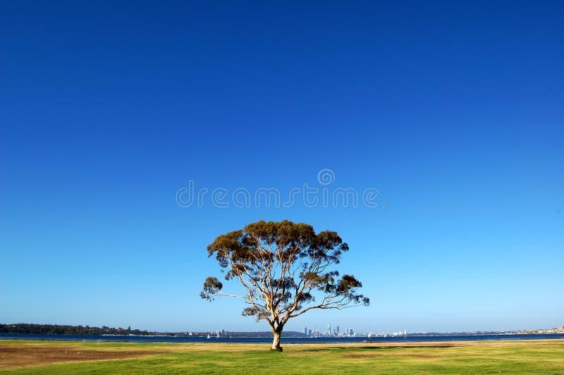 下蓝天结构树 免版税库存照片