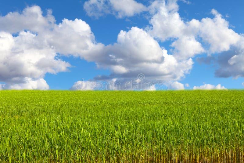 下蓝色芦苇天空 免版税库存图片