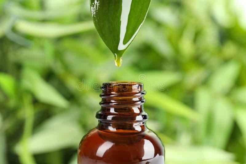 下跌从叶子的油下落入玻璃瓶反对被弄脏的绿色背景,特写镜头 免版税库存照片