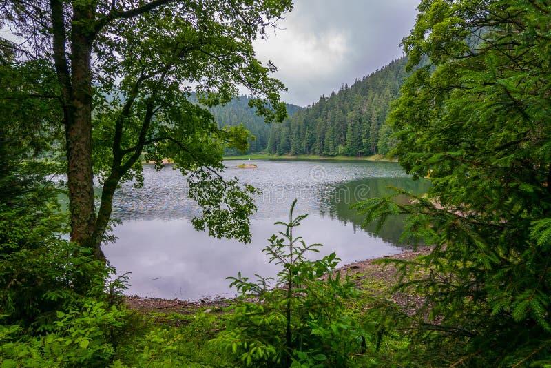 下跌在一个美丽的透明山湖在一个绿色森林中间的雨水滴 免版税库存照片