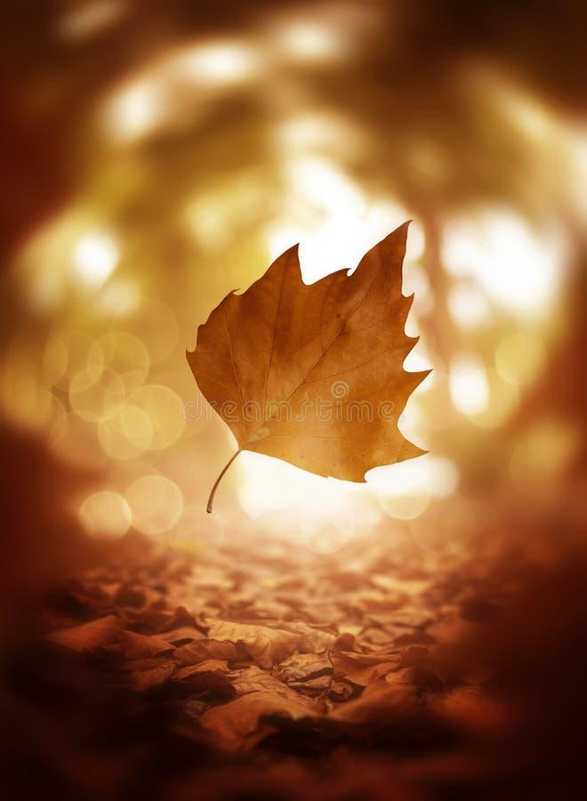下跌的秋天树叶子背景关闭  免版税库存照片
