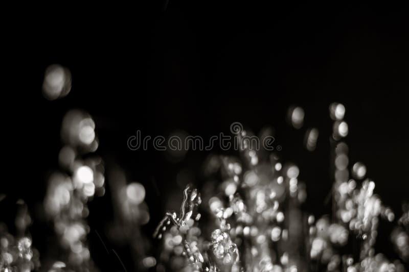 水下跌的滴在黑背景的文本的很多空间 在空气的Waterdrops飞行射击了与copyspace 库存图片