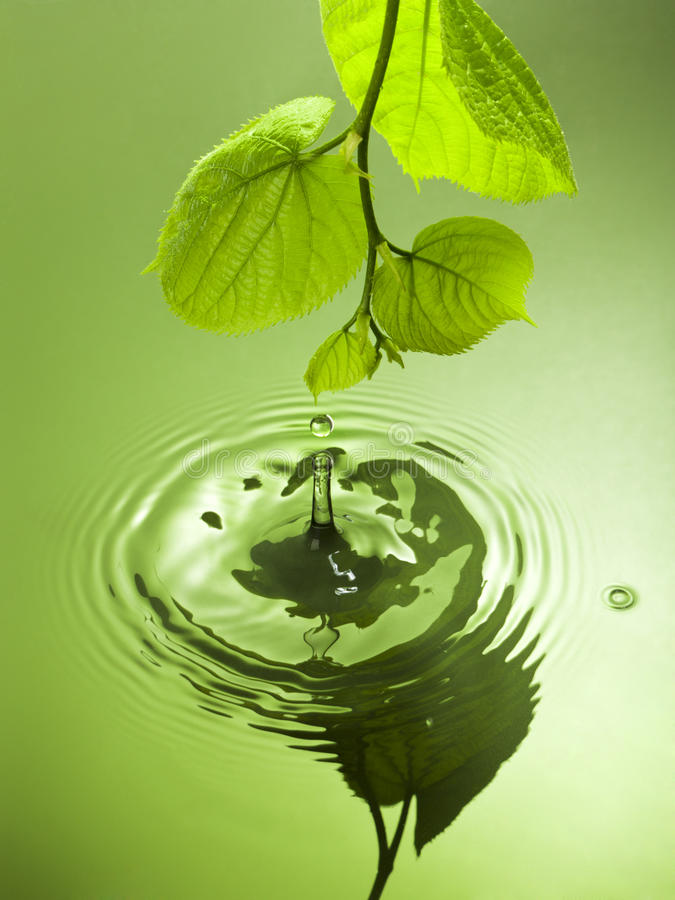 下跌从叶子的水下落 库存照片