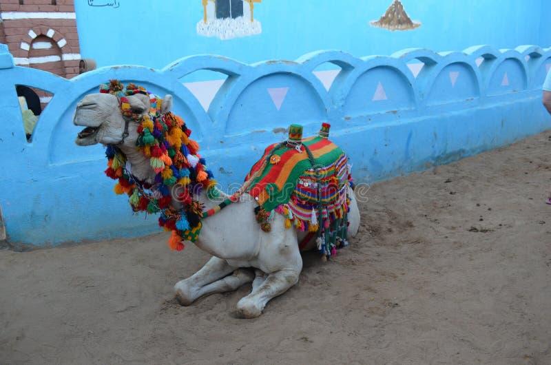 下跪在埃及街道上的装饰的骆驼 免版税库存照片