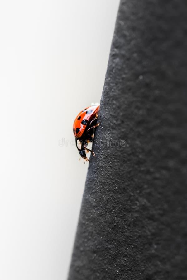 下降金属桥梁的红色瓢虫 免版税图库摄影