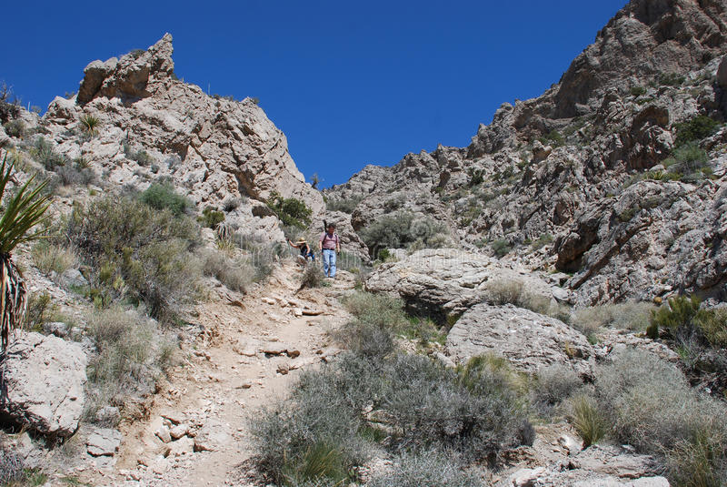 下降Turtlehead的远足者在藤红色的岩石锐化 免版税库存照片