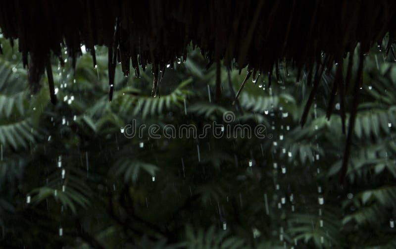 下雨下落跌倒从竹屋顶 库存照片