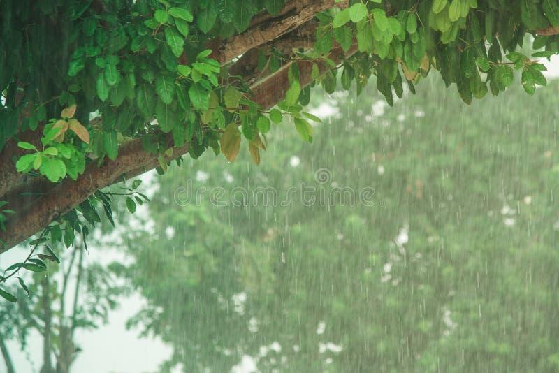 下雨下跌在水泥地板上的下落有绿色自然本底 软绵绵地集中 库存图片