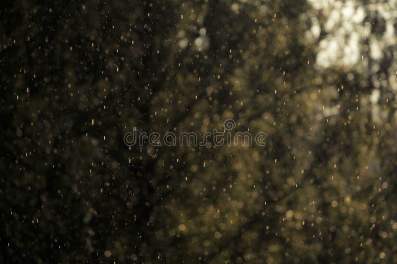 下雨下跌的下落在与被弄脏的树的温暖的阳光在背景中 免版税库存照片