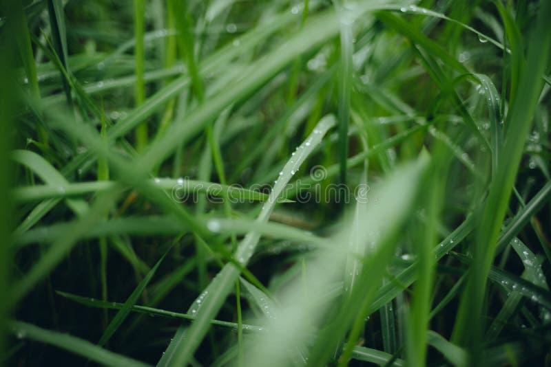 下雨在绿草的下落阴暗天 库存照片