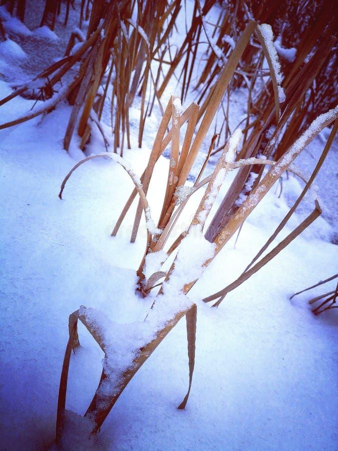 下雨在雪 库存图片