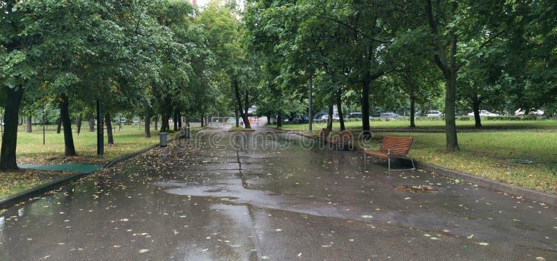 下雨天在公园 免版税库存图片