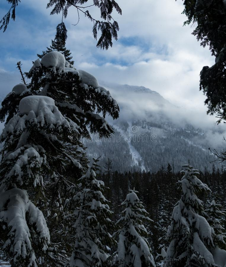 下雪在冬天的冰川国家公园 库存照片