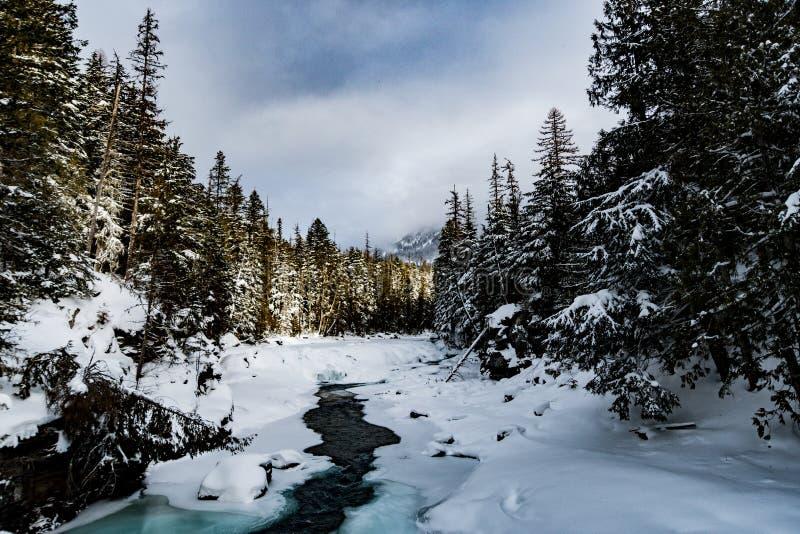 下雪在冬天的冰川国家公园 免版税库存图片