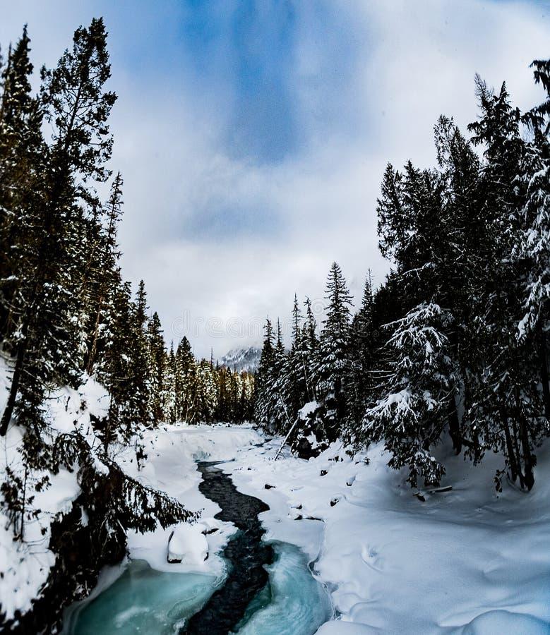 下雪在冬天的冰川国家公园 免版税库存照片