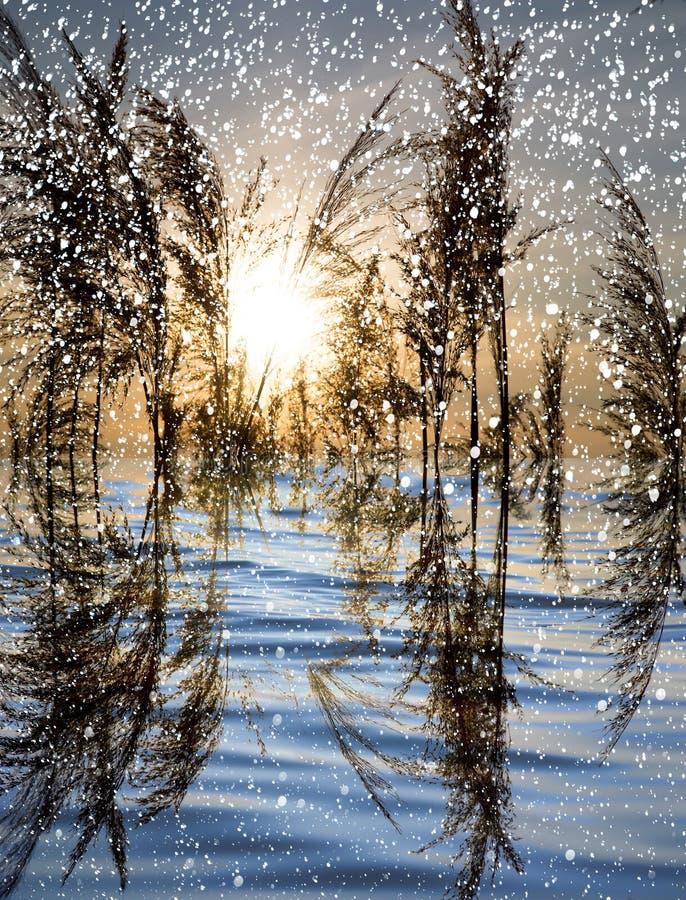 下雪在有芦苇的湖在日落 库存图片