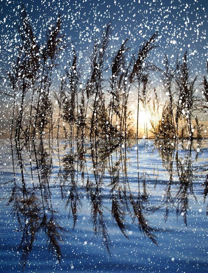 下雪在有芦苇的湖在日落 图库摄影