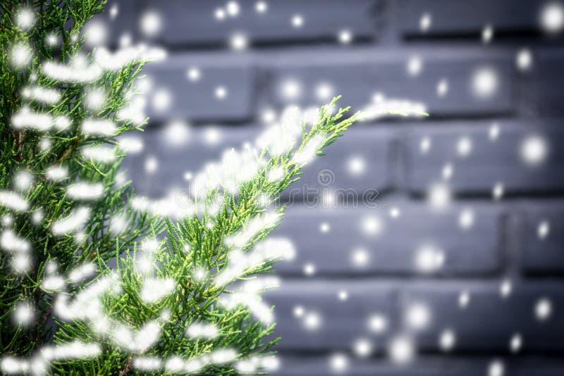 下雪在杉木叶子纹理和背景在冬天 图库摄影