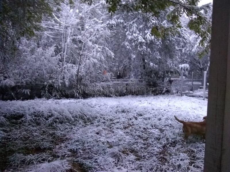 下雪在科珀斯克里斯提tx 免版税库存图片