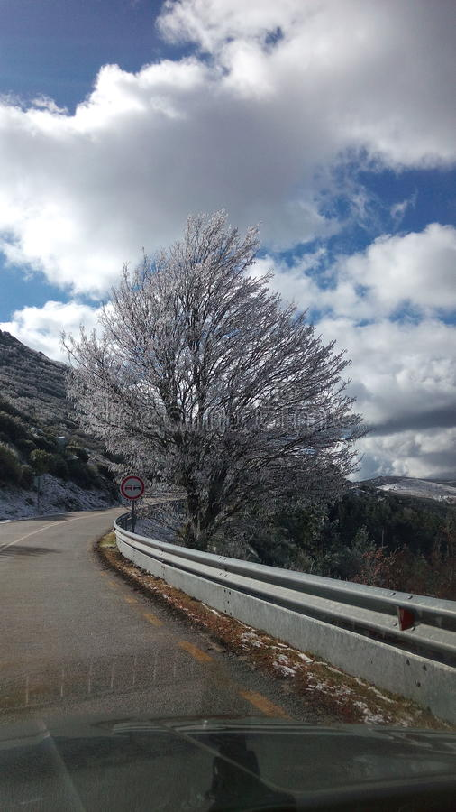 下雪的树 免版税库存图片