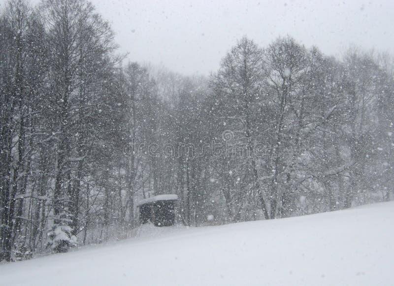 下雪 库存图片