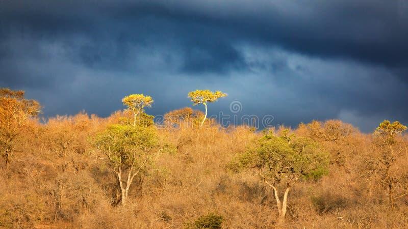 下非洲天空 库存照片