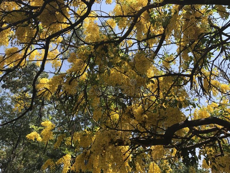 从下面被看见的黄色树 免版税库存照片