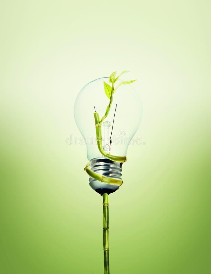 不伤环境的电灯泡 免版税图库摄影