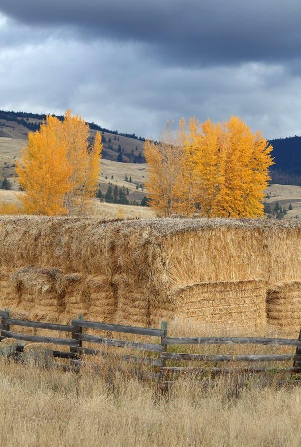 不列颠哥伦比亚省干草堆nicola谷垂直 免版税图库摄影
