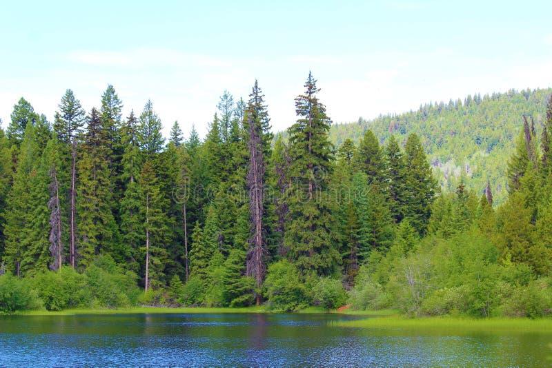 不列颠哥伦比亚省林克湖的美容 免版税库存图片
