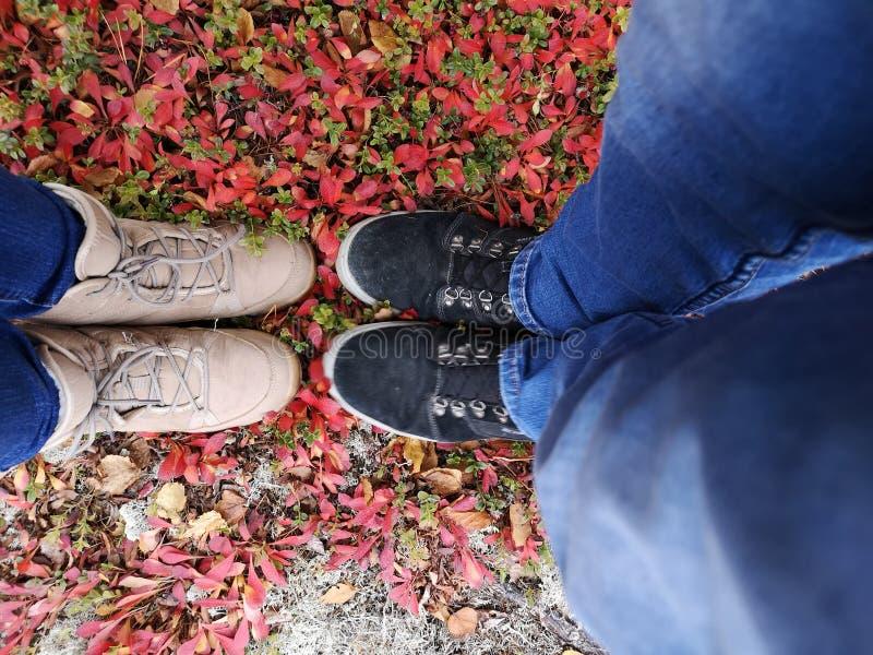 不单独站立在灌木, 图库摄影