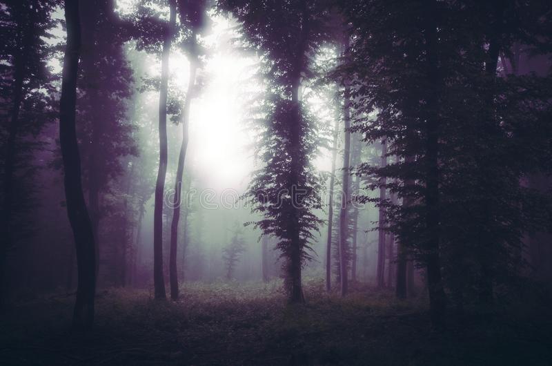不可思议的光在有雾的超现实的森林里在晚上 库存照片