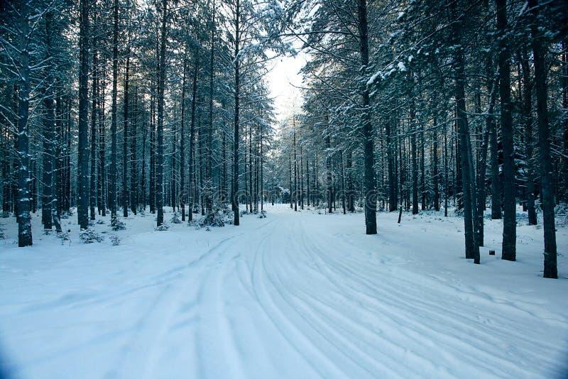 不可思议的冬天森林,一个童话, 免版税图库摄影